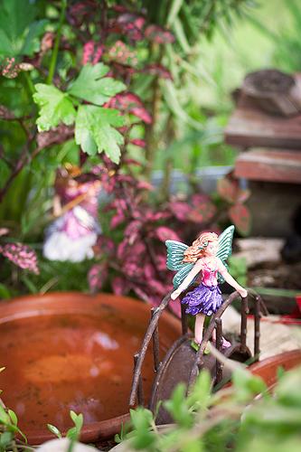 Fairygarden13